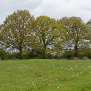 may meadow2
